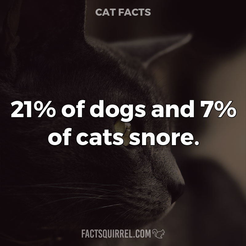 21% of dogs and 7% of cats snore