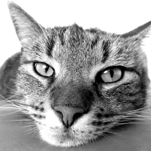 27 Interesting Facts About Cats That Might Surprise You