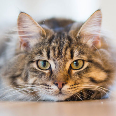 47 Incredible Random Facts About Cats