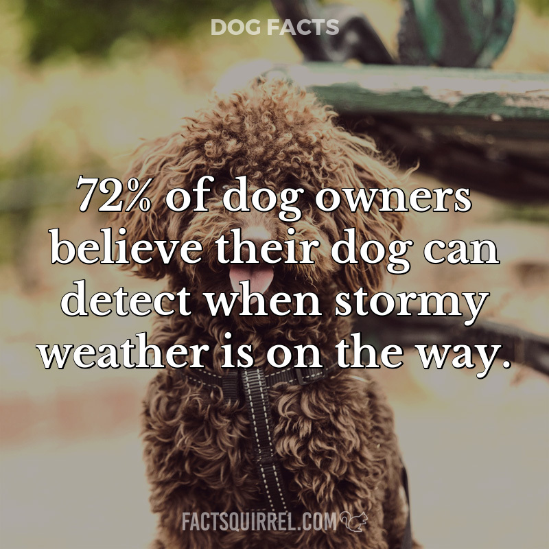72% of dog owners believe their dog can detect when stormy weather is on