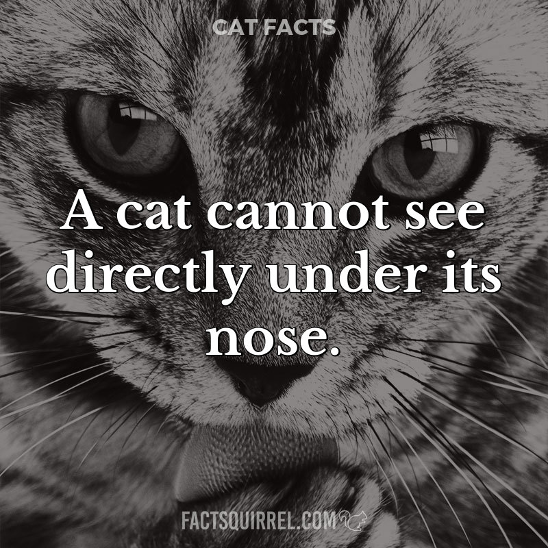A cat cannot see directly under its nose