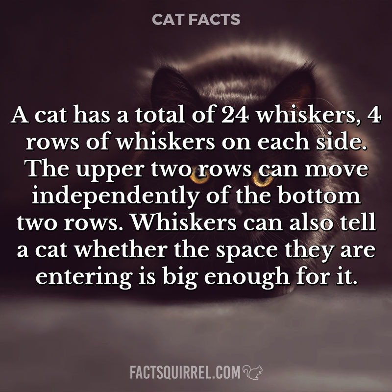 A cat has a total of 24 whiskers, 4 rows of whiskers on each side. The