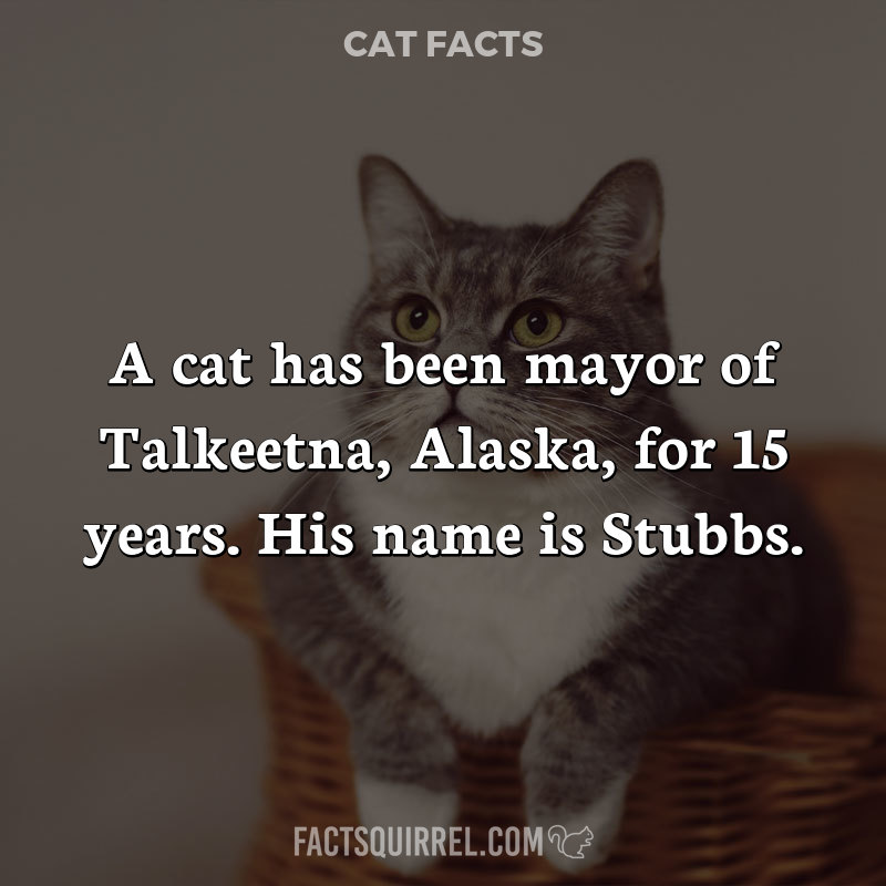 A cat has been mayor of Talkeetna, Alaska, for 15 years. His name is