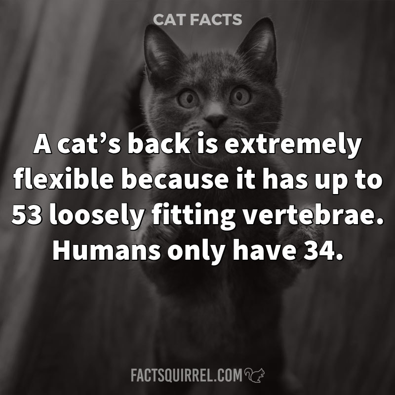 A cat's back is extremely flexible because it has up to 53 loosely