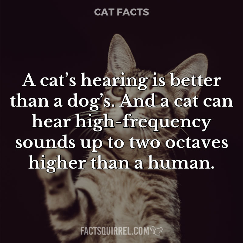 A cat's hearing is better than a dog's. And a cat can hear