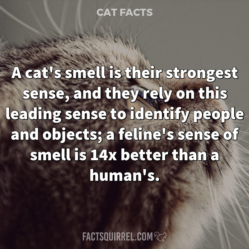 A cat's smell is their strongest sense, and they rely on this leading