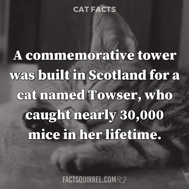 A commemorative tower was built in Scotland for a cat named Towser, who