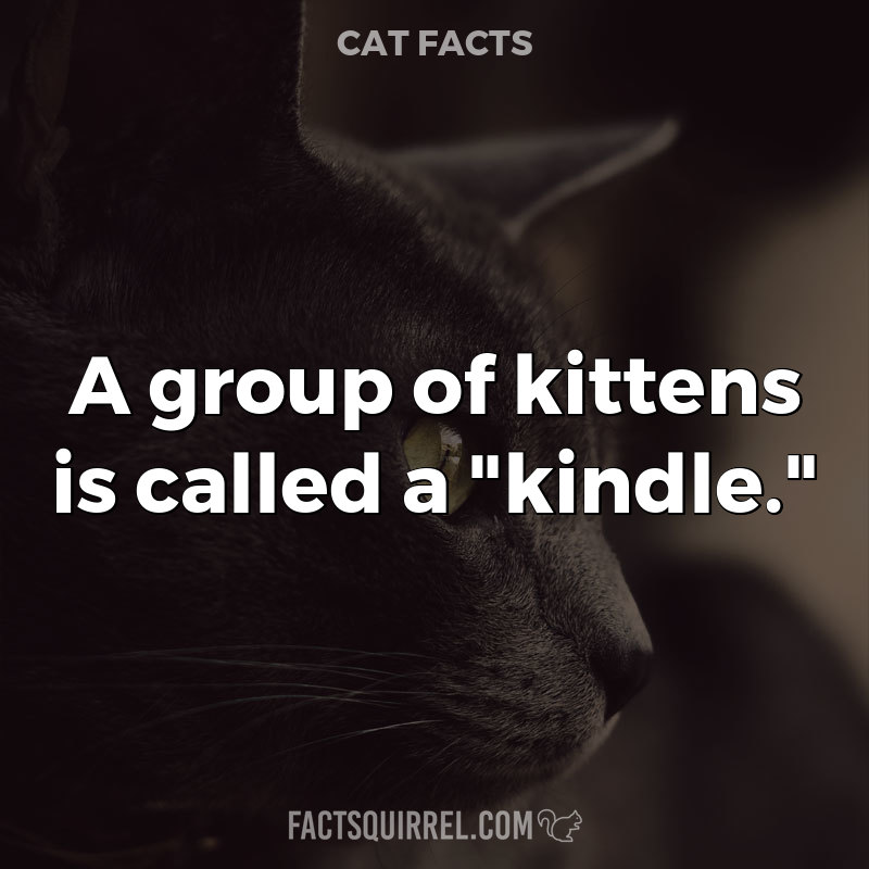 """A group of kittens is called a """"kindle."""""""