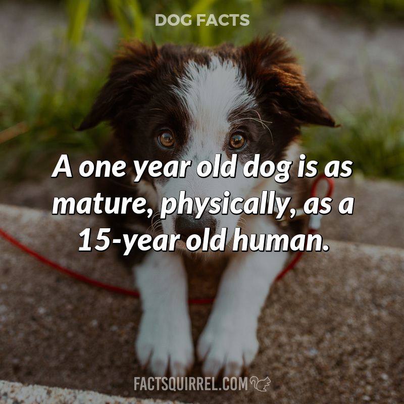 A one year old dog is as mature, physically, as a 15-year old human