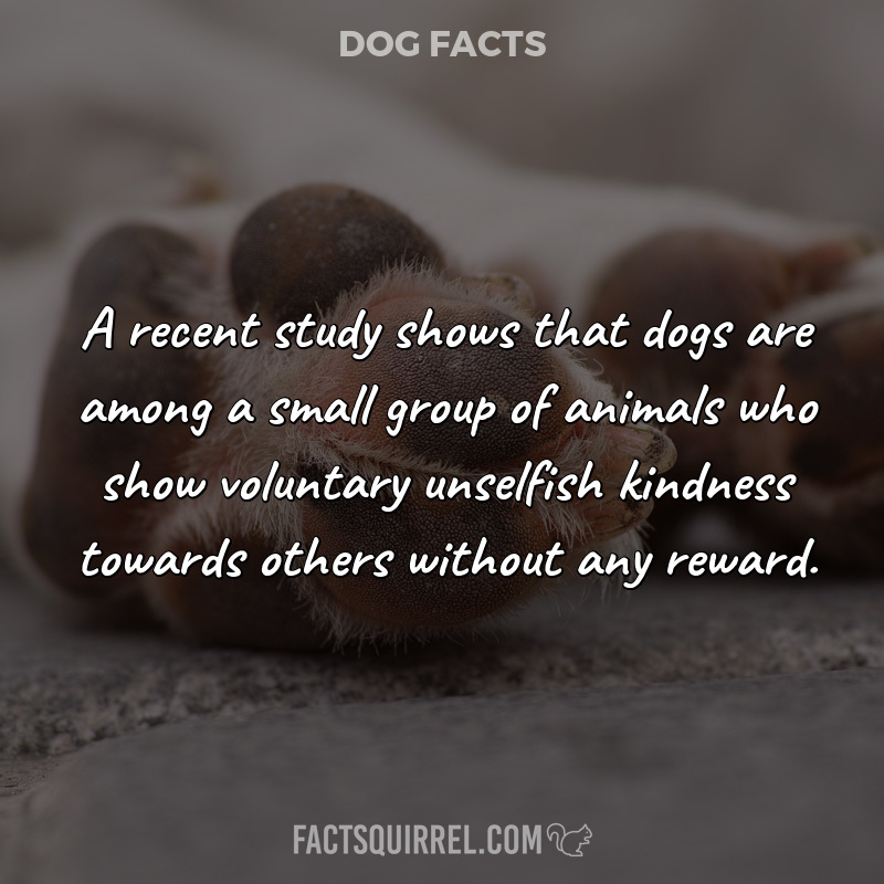 A recent study shows that dogs are among a small group of animals who