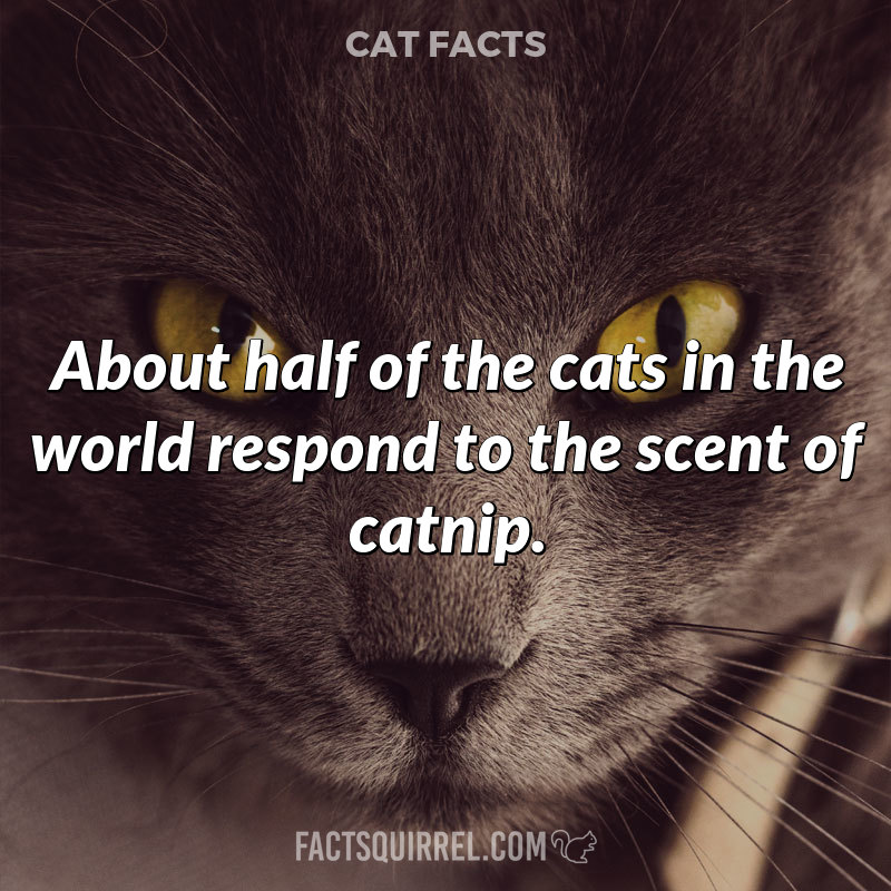 About half of the cats in the world respond to the scent of catnip