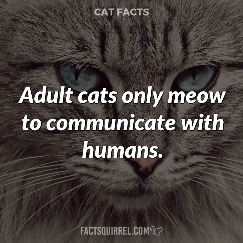 Adult cats only meow to communicate with humans