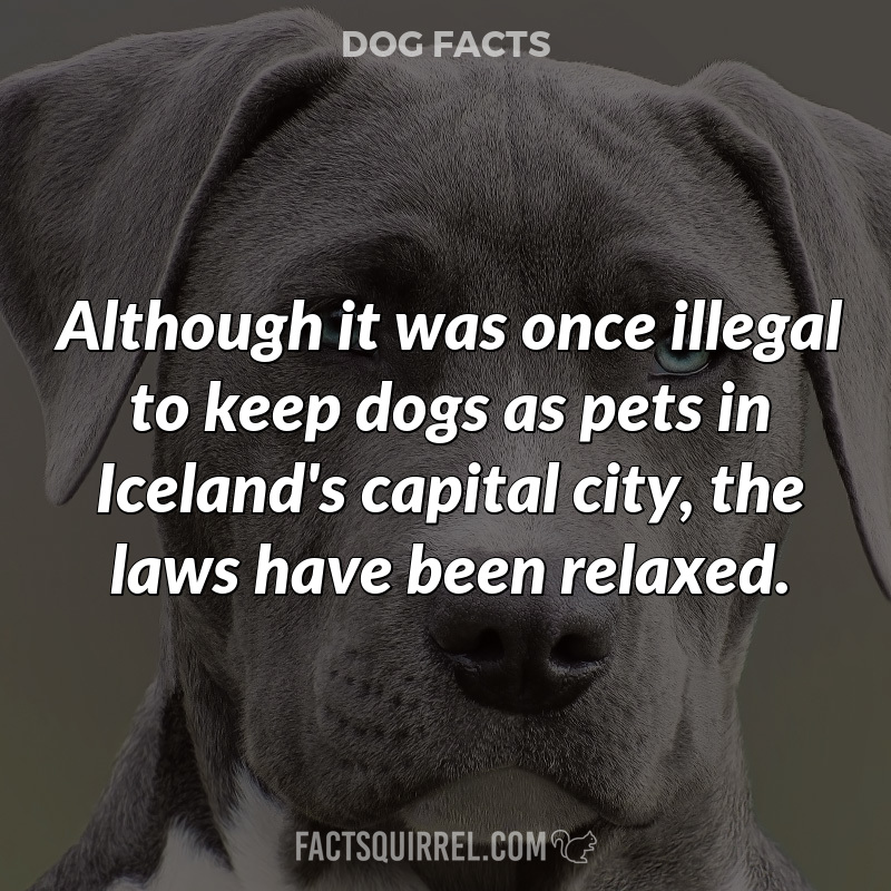 Although it was once illegal to keep dogs as pets in Iceland's capital