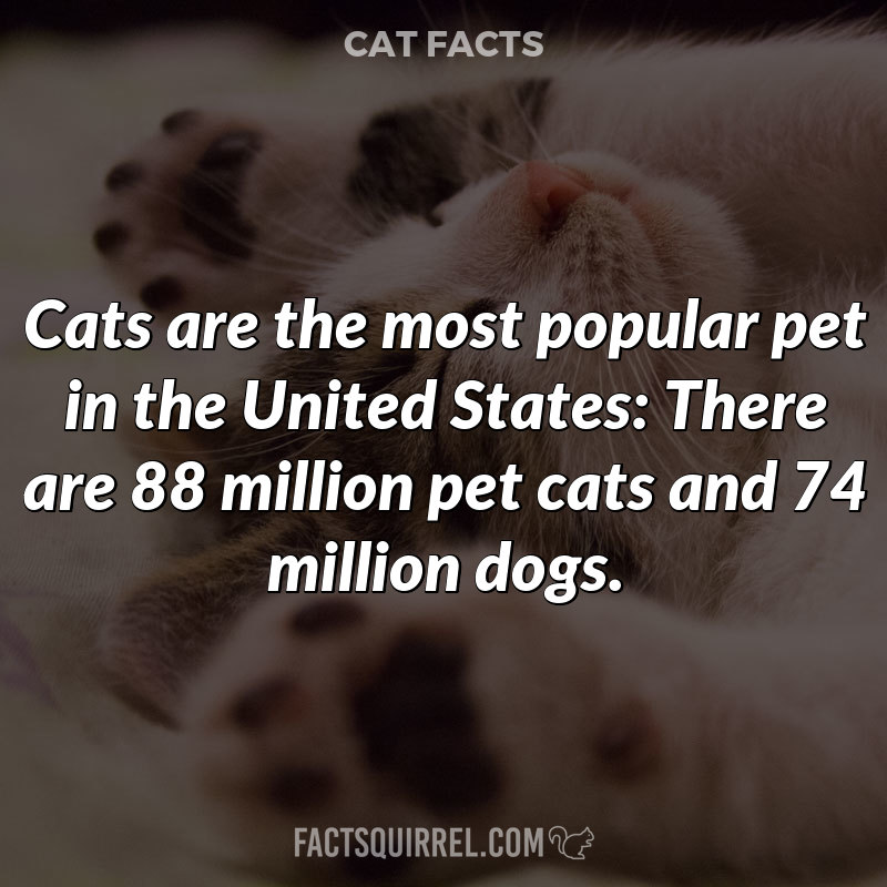 Cats are the most popular pet in the United States: There are 88 million