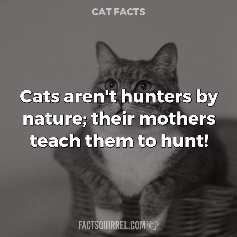 Cats aren't hunters by nature; their mothers teach them to hunt!
