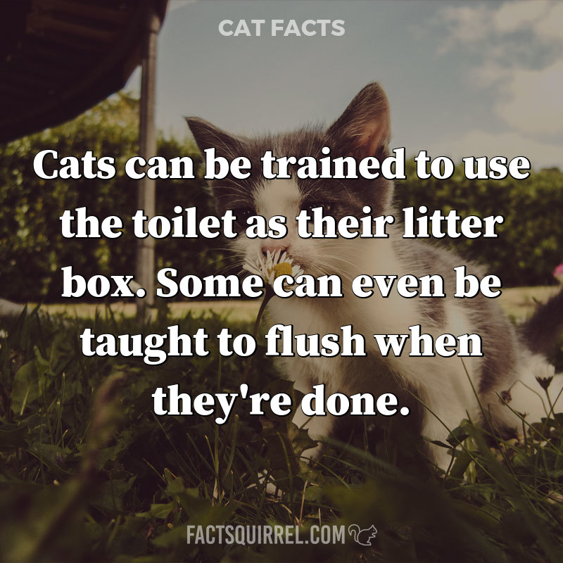 Cats can be trained to use the toilet as their litter box. Some can even