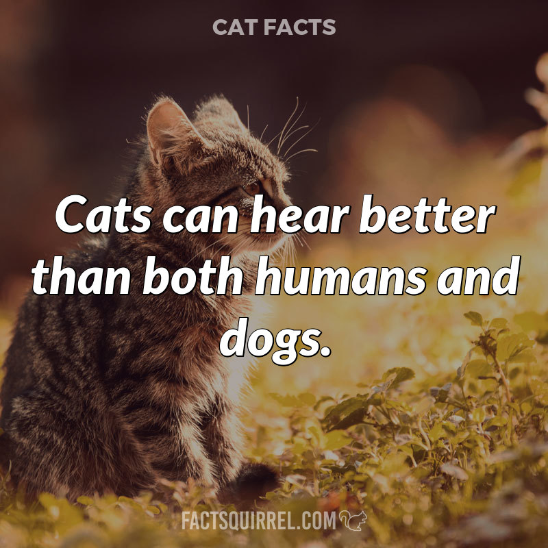 Cats can hear better than both humans and dogs