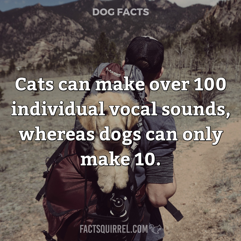 Cats can make over 100 individual vocal sounds, whereas dogs can only