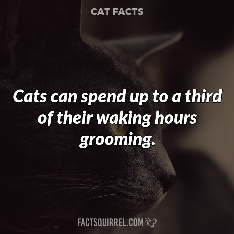 Cats can spend up to a third of their waking hours grooming