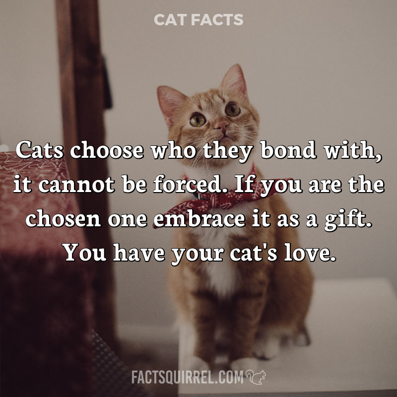 Cats choose who they bond with, it cannot be forced. If you are the