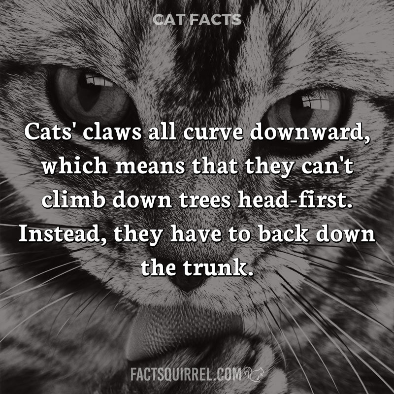 Cats' claws all curve downward, which means that they can't climb down