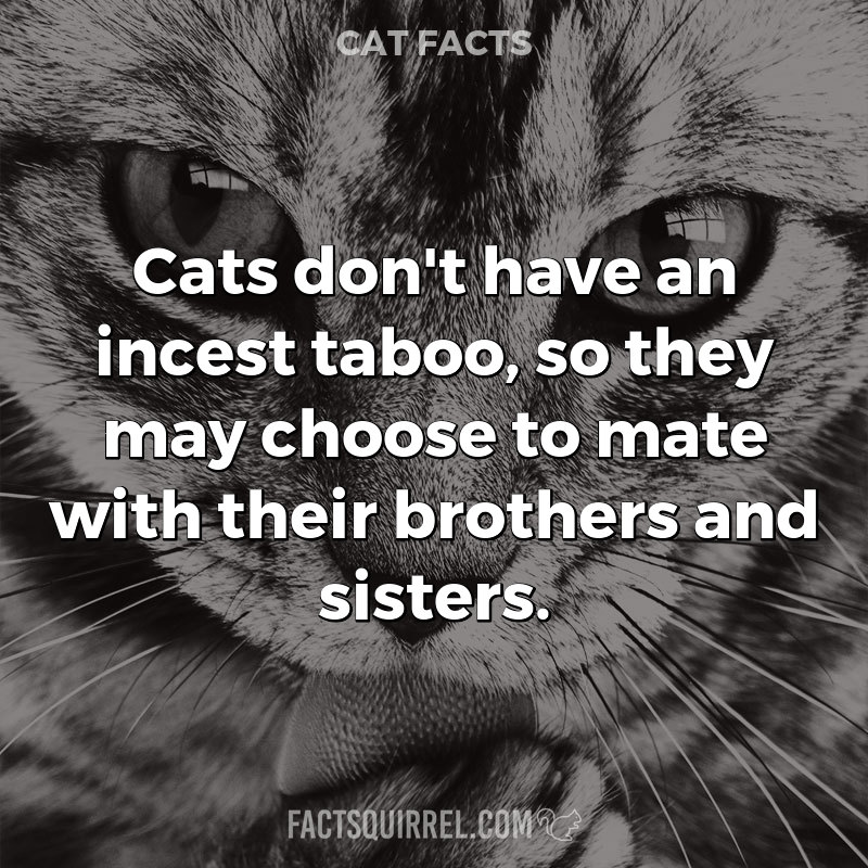 Cats don't have an incest taboo, so they may choose to mate with their