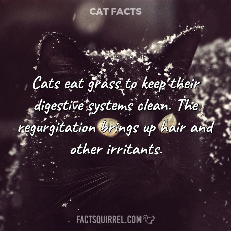 Cats eat grass to keep their digestive systems clean. The regurgitation