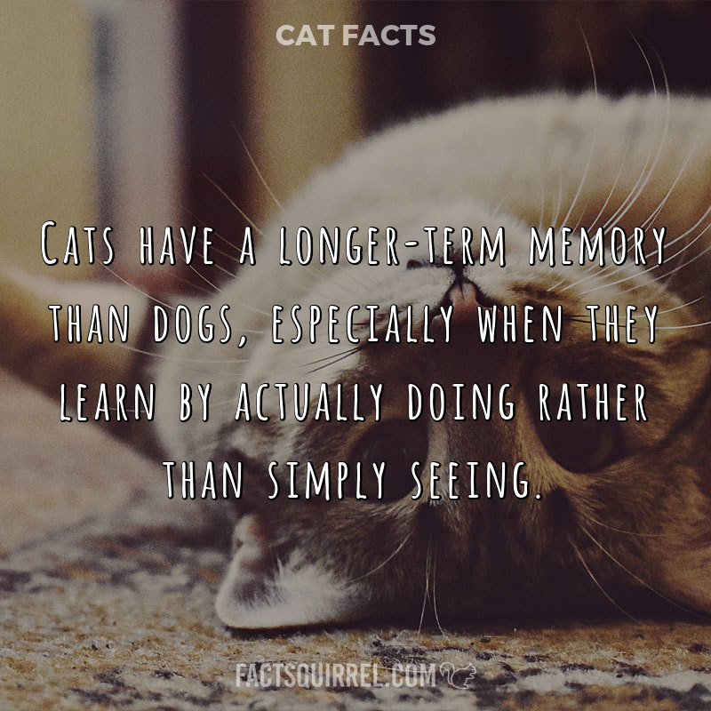 Cats have a longer-term memory than dogs, especially when they learn by