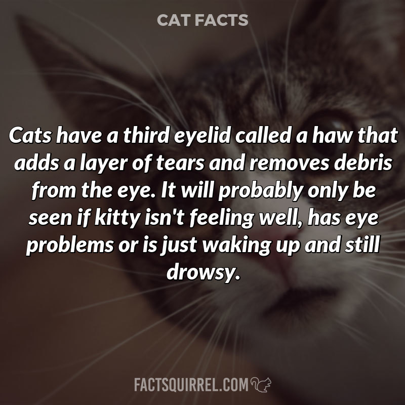 Cats have a third eyelid called a haw that adds a layer of tears and