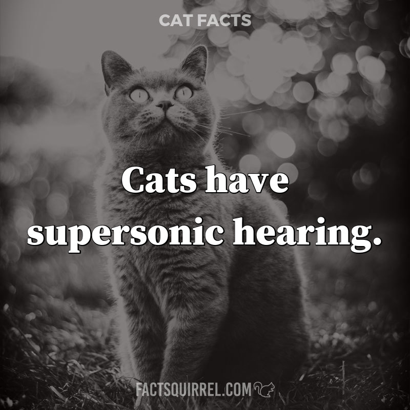 Cats have supersonic hearing