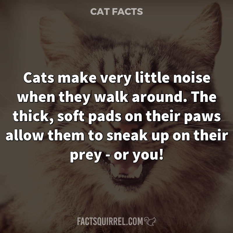 Cats make very little noise when they walk around. The thick, soft pads