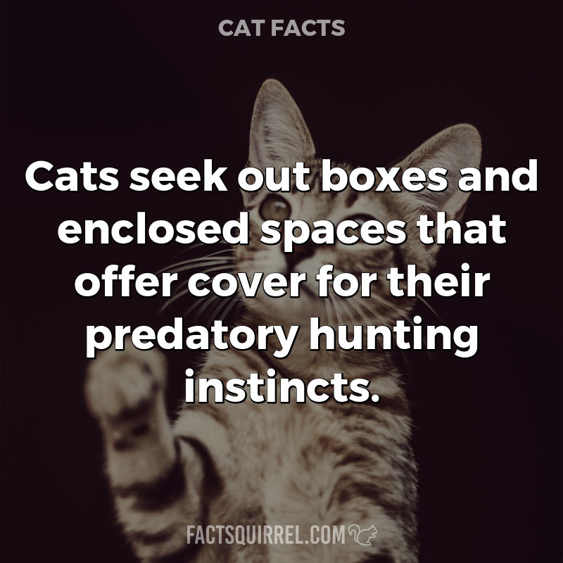 Cats seek out boxes and enclosed spaces that offer cover for their