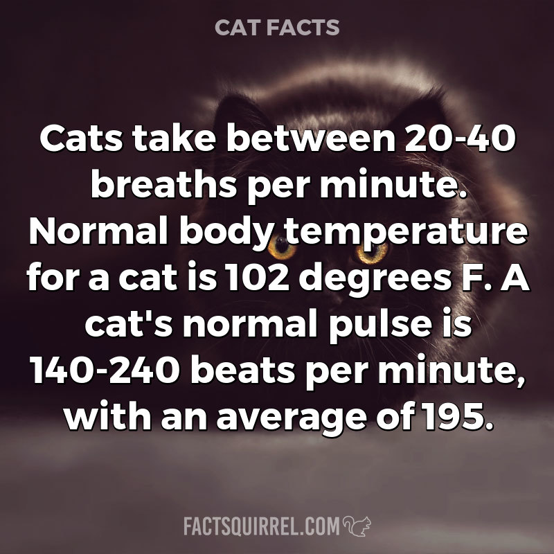 Cats take between 20-40 breaths per minute. Normal body temperature for