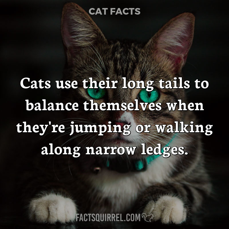 Cats use their long tails to balance themselves when they're jumping or