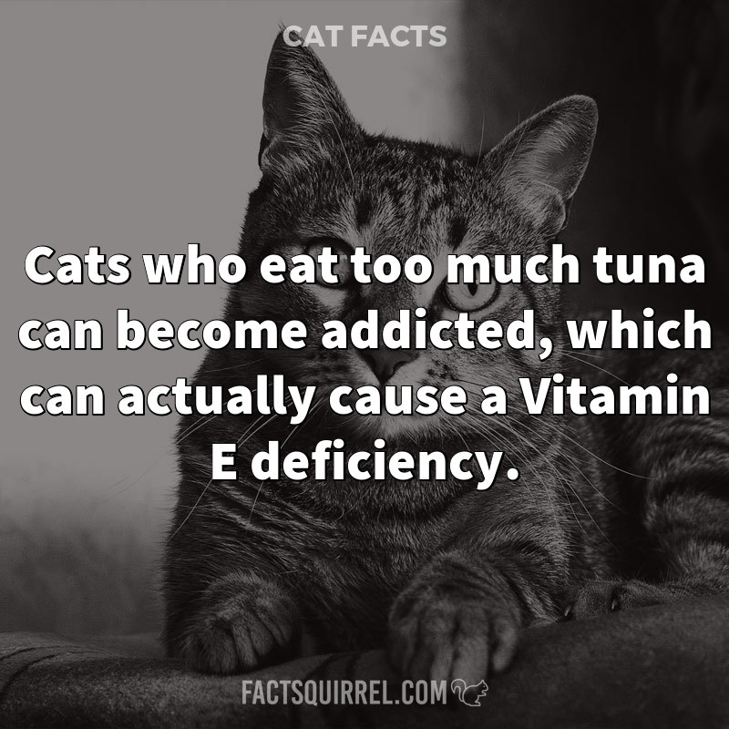 Cats who eat too much tuna can become addicted, which can actually cause