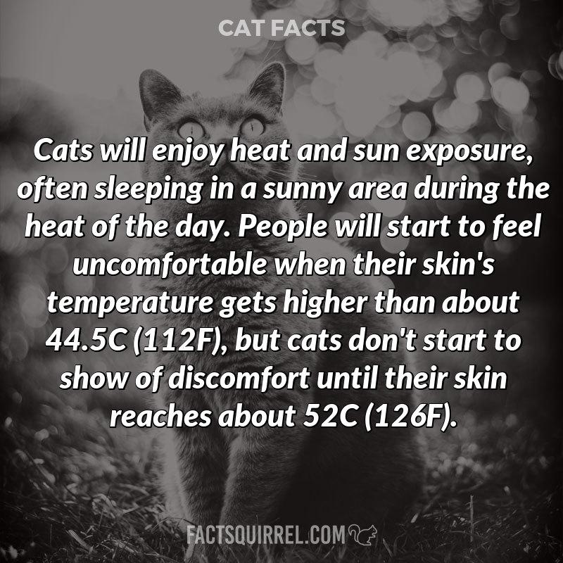 Cats will enjoy heat and sun exposure, often sleeping in a sunny area