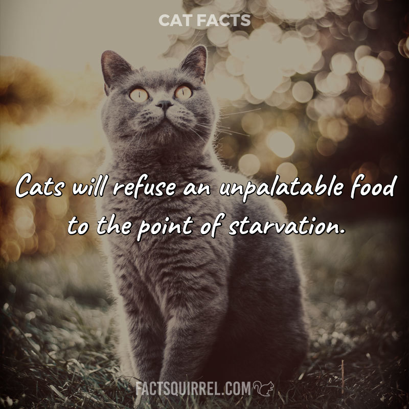 Cats will refuse an unpalatable food to the point of starvation