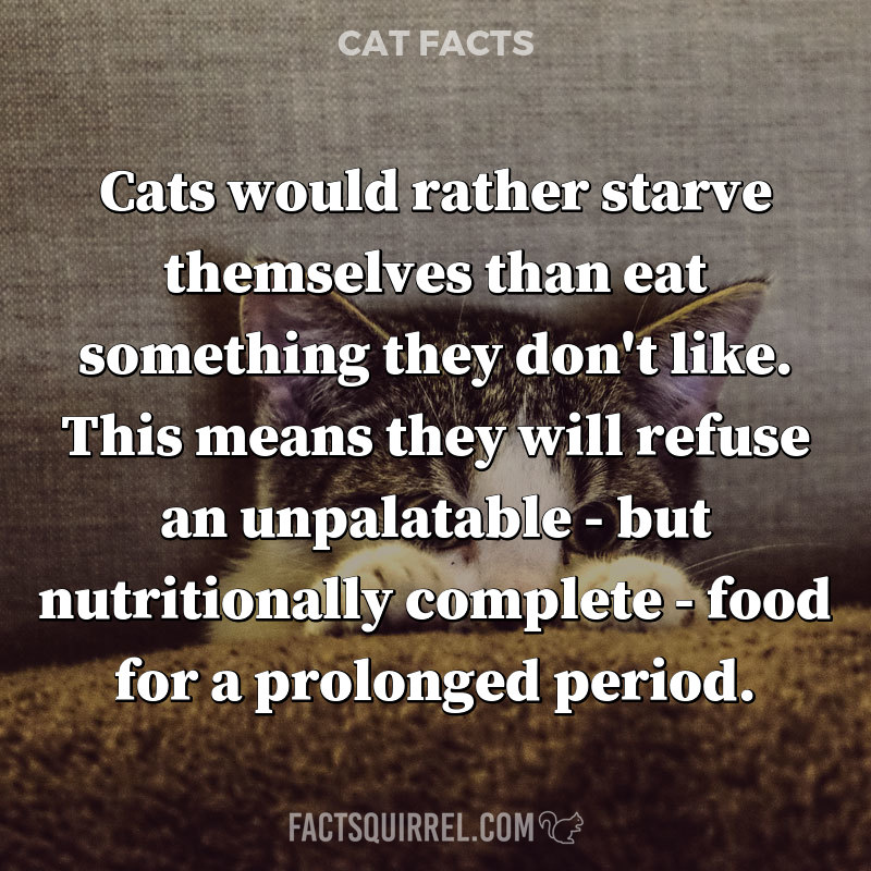 Cats would rather starve themselves than eat something they don't like.