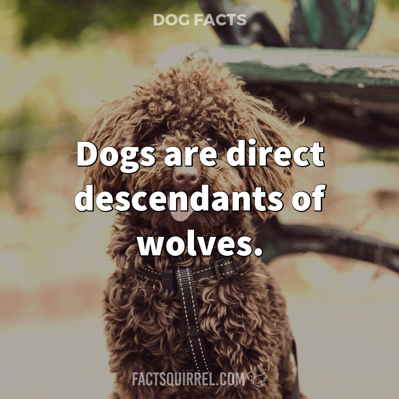 Dogs are direct descendants of wolves