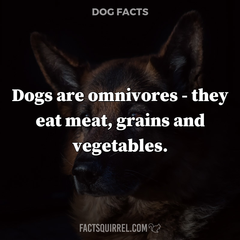 Dogs are omnivores – they eat meat, grains and vegetables