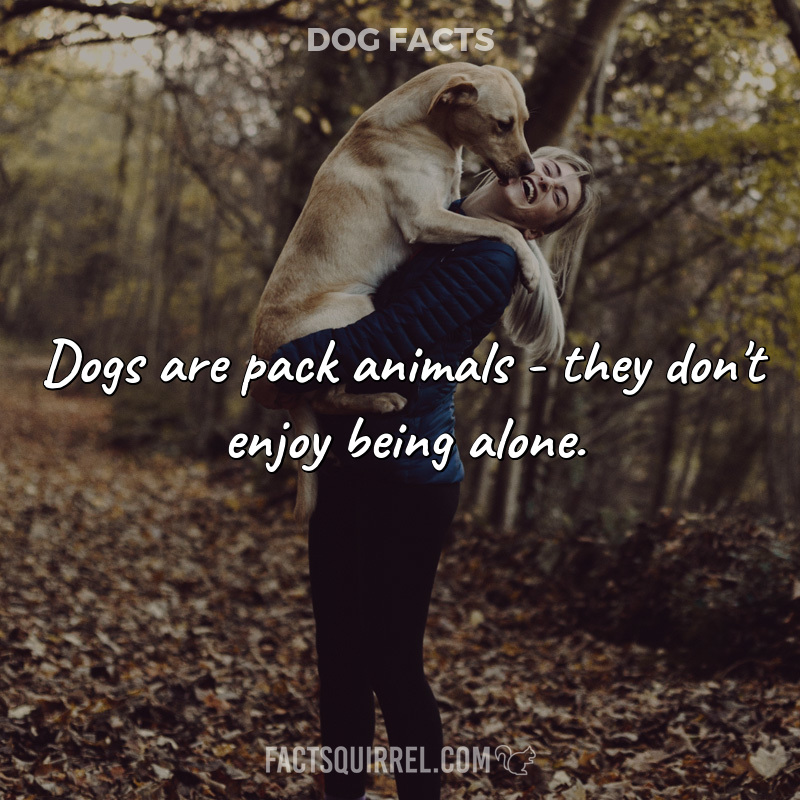 Dogs are pack animals – they don't enjoy being alone