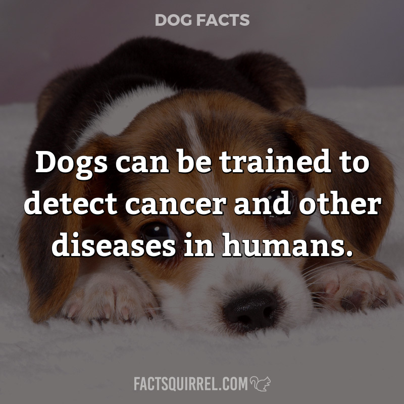 Dogs can be trained to detect cancer and other diseases in humans