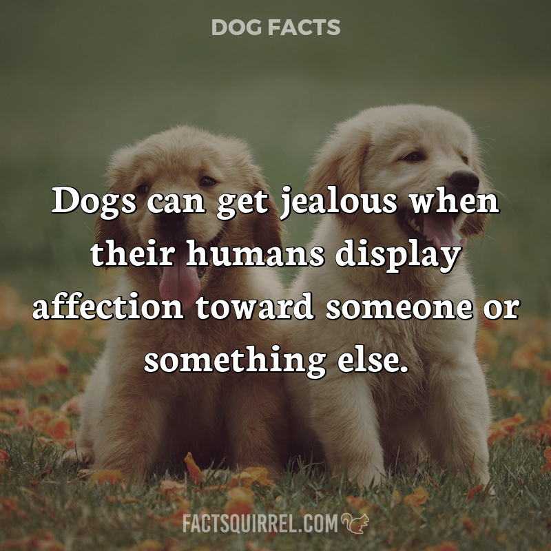 Dogs can get jealous when their humans display affection toward someone