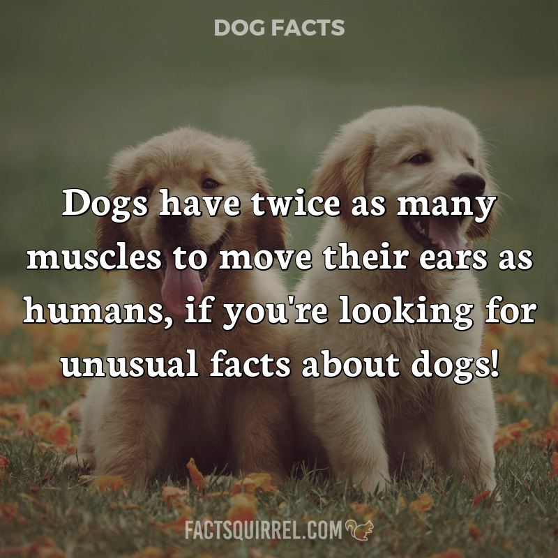 Dogs have twice as many muscles to move their ears as humans, if you're
