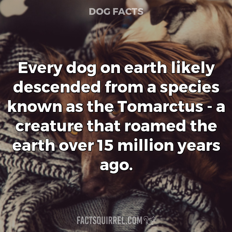Every dog on earth likely descended from a species known as the