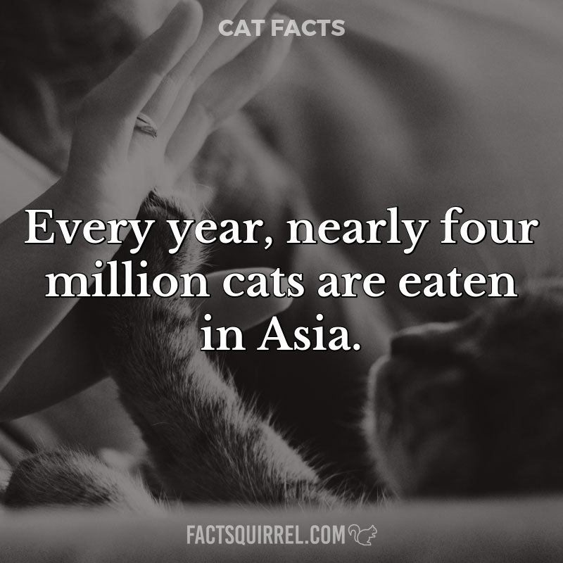 Every year, nearly four million cats are eaten in Asia