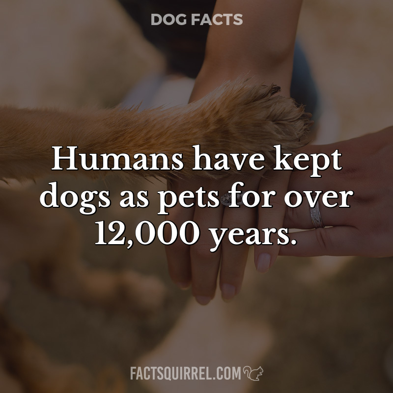 Humans have kept dogs as pets for over 12,000 years
