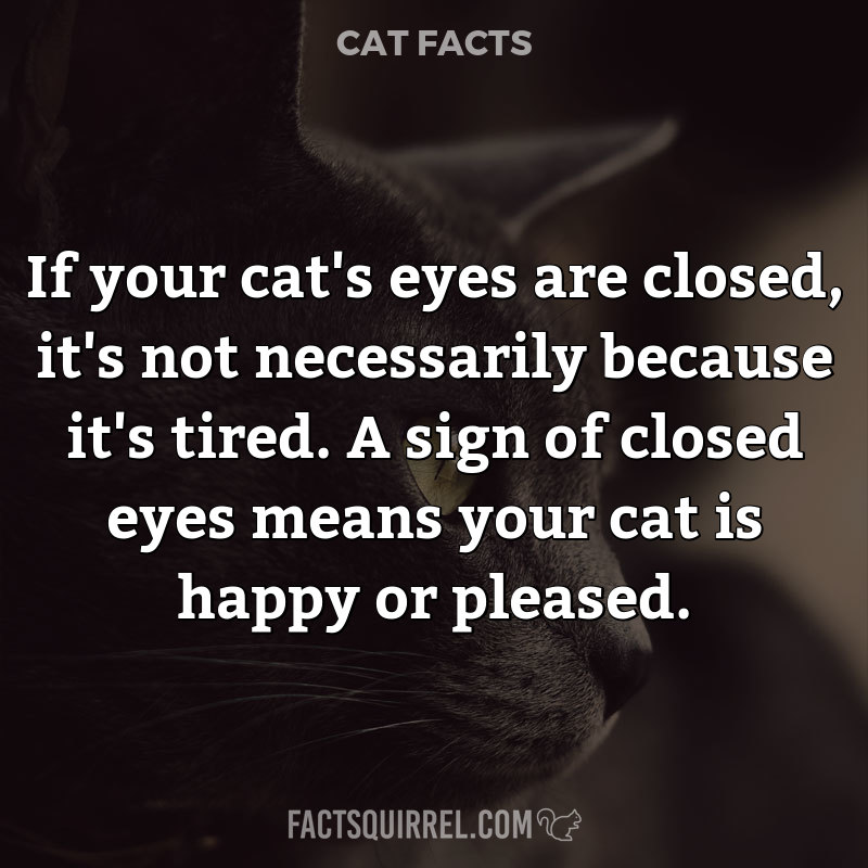 If your cat's eyes are closed, it's not necessarily because it's tired.
