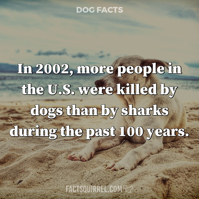 In 2002, more people in the U.S. were killed by dogs than by sharks