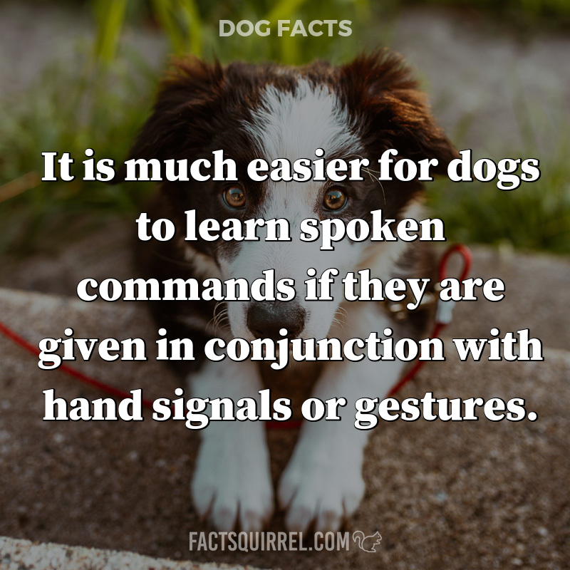 It is much easier for dogs to learn spoken commands if they are given in